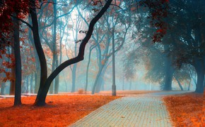 Wallpaper road, autumn, leaves, trees, landscape, branches, nature, fog, Park, trunks, foliage, tile, post, morning, track, ...