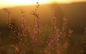 Picture sunset, flowers, background