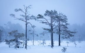 Picture winter, frost, forest, the sky, snow, trees, branches, fog, morning, frost, the snow, haze, pine, …
