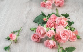 Picture table, roses, pink, buds