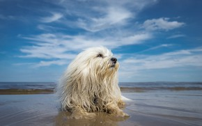 Picture beach, the sky, dog