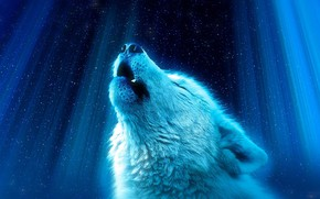 Picture rays, background, wolf