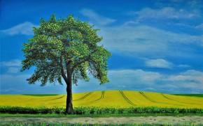 Picture field, landscape, tree, picture