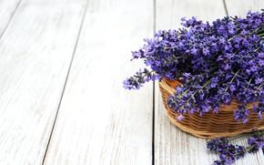 Picture flowers, bouquet, basket, lavender, Olena Rudo