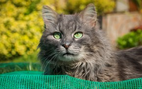 Picture cat, cat, look, light, nature, grey, background, mesh, pen, foliage, portrait, garden, nose, fluff, grey, …