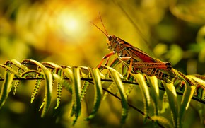Picture leaves, the sun, light, grasshopper, fern