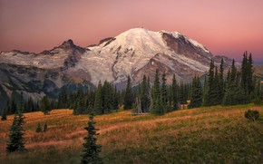 Picture forest, the sky, grass, trees, mountains, dawn, meadow, USA, Mount Rainier National Park