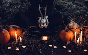 Picture autumn, light, night, branches, nature, fire, holiday, magic, feet, glade, skull, ritual, candles, hands, pumpkin, …