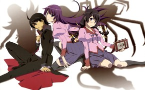 Picture girls, anime, art, guy, Bakemonogatari