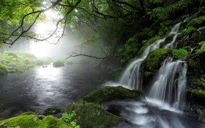 Picture trees, branches, nature, fog, river, stones, waterfall, moss, Japan