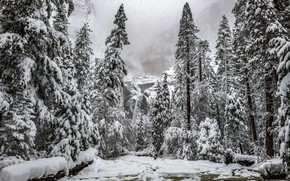 Picture winter, snow, mountain, waterfall, ate, tree, Christmas trees