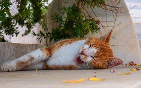 Picture language, cat, cat, face, leaves, branches, stay, street, red, sleeping, lies, yawns, sleepy
