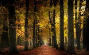 Picture autumn, nature, Park