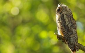 Picture owl, bird, profile, bitches, bokeh