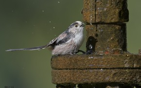 Picture water, squirt, nature, background, bird, pipe, DUELL ©