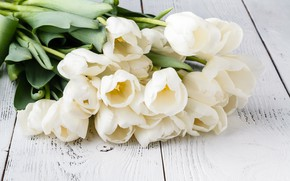 Picture table, bouquet, tulips, gentle, white