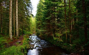 Picture forest, trees, nature, river