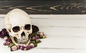Picture flowers, skull, Halloween, sake