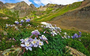 Picture landscape, flowers, mountains, nature, valley, Colorado, USA, meadows, Aquilegia
