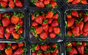 Picture berries, harvest, strawberry, containers, packaging, trays, Victoria, boxes, selling