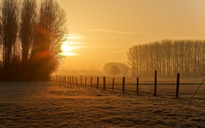 Picture field, autumn, the sun, light, trees, posts, the fence