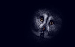 Picture background, owl, dark, head