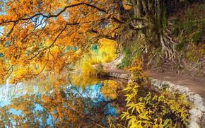Picture autumn, pond, Park, reflection