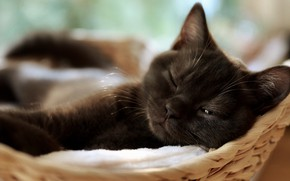 Picture cat, kitty, stay, black, sleeping, lies