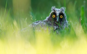 Picture grass, look, owl, portrait, green background, bokeh, Peeps