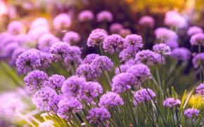 Picture Flowers, Flower, Plant, Petals, Plants, Flower, Flowers, Flora, Plants, Close-up, Blooming, Bloom, Flora, Plant, Todd …