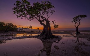 Picture trees, the evening, tide, Indonesia, glow, Walakiri Beach