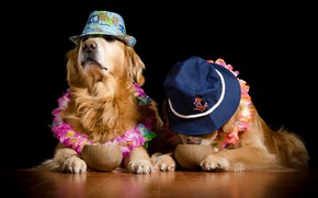 Picture dogs, flowers, coconuts