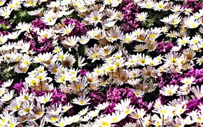 Picture flowers, white, flowerbed