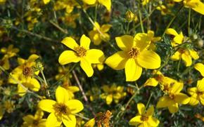 Picture summer, flowers, yellow, Meduzanol ©