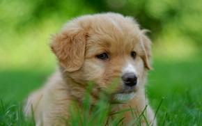 Picture portrait, dog, puppy, face, bokeh, doggie