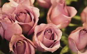 Picture tenderness, roses, bouquet, pink