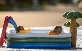Picture summer, macro, background, mood, stay, two, snail, snails, pool, bathing, pair, a couple, Duo, toy, …