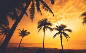 Picture sea, beach, summer, sunset, palm trees, shore, silhouette, summer, beach, sea, sunset, seascape, beautiful, paradise, …