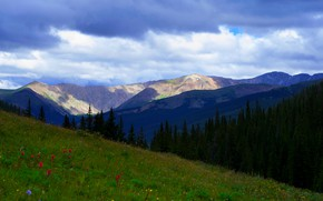 Picture forest, summer, the sky, flowers, mountains, blue, the slopes, meadow