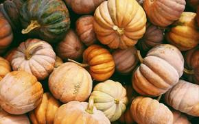 Picture autumn, harvest, pumpkin, a lot, different