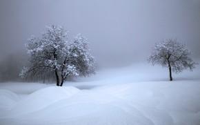 Picture winter, snow, trees, Switzerland, the snow