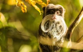 Picture Monkey, Mustache, Monkey