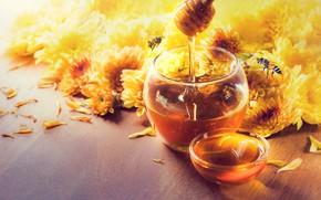 Picture flowers, Honey, chrysanthemum