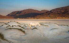 Picture sand, white, grass, landscape, mountains, nature, horse, hills, shore, horse, dunes, walk, Iceland, settlement, blue …