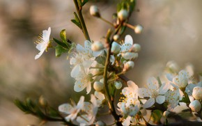 Picture flowers, nature, branch, spring, flowering
