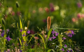 Picture grass, flowers, meadow