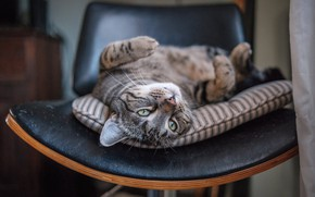Picture cat, cat, relax, muzzle, chair, chill, cat