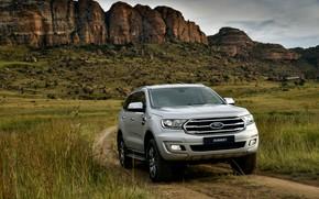 Picture field, vegetation, Ford, Everest, 4WD, XLT, 2019