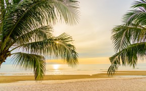 Picture sand, sea, the sky, water, the sun, sunset, palm trees, the evening