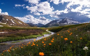 Wallpaper the sky, clouds, flowers, mountains, blue, stream, hills, Russia, pond, Altay, frying, globeflowers